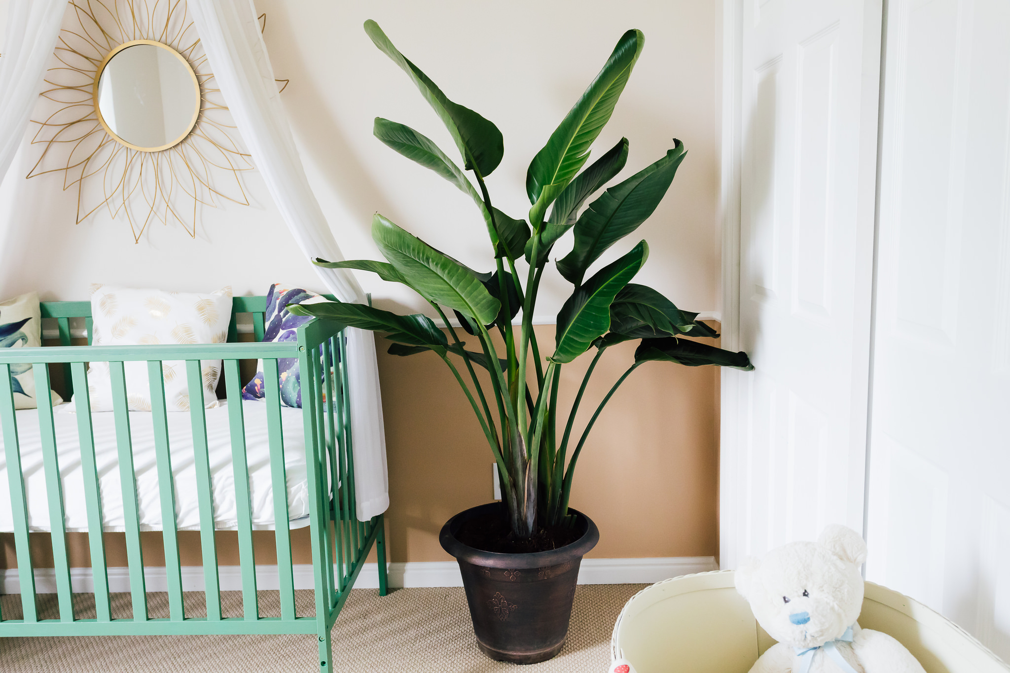 The Succulent And Cacti Themed Nursery Reveal